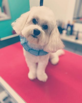 We love the slight head tilts. He's so cute! Meet Sam! ✨